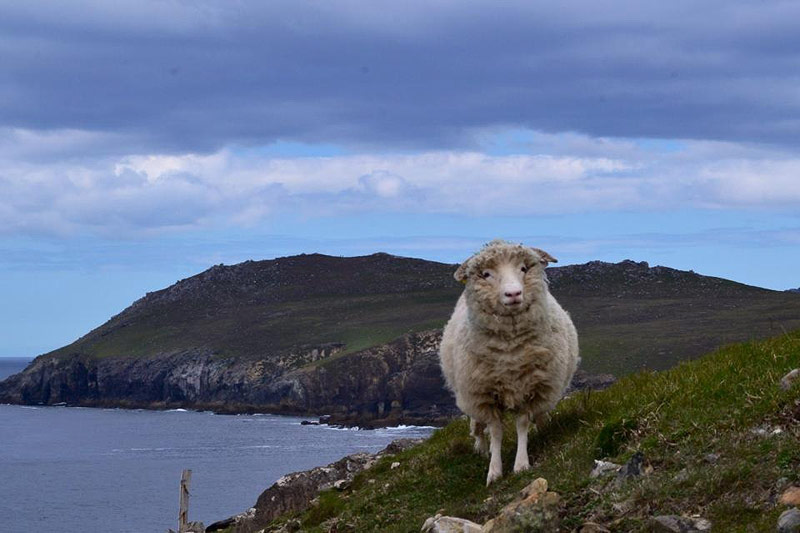 A resident of the Wild Atlantic Way